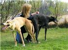 狗鞭入女人体:狗的东西有多大图