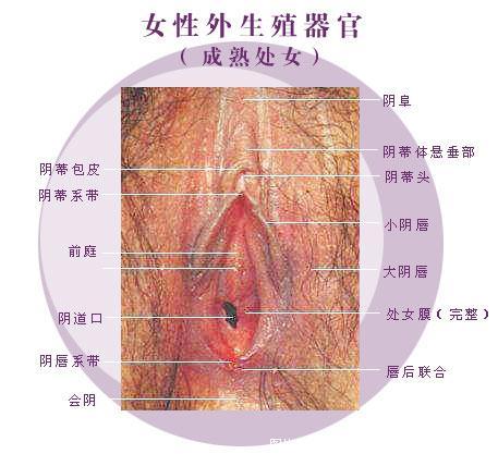 阴道图解: 真人阴道图解,阴道内部图解