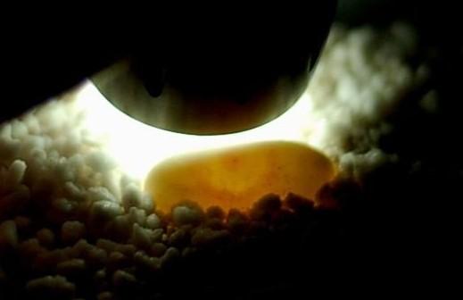 受精后有什么反应 受精过程图片 高清(点击浏览下一张趣图)
