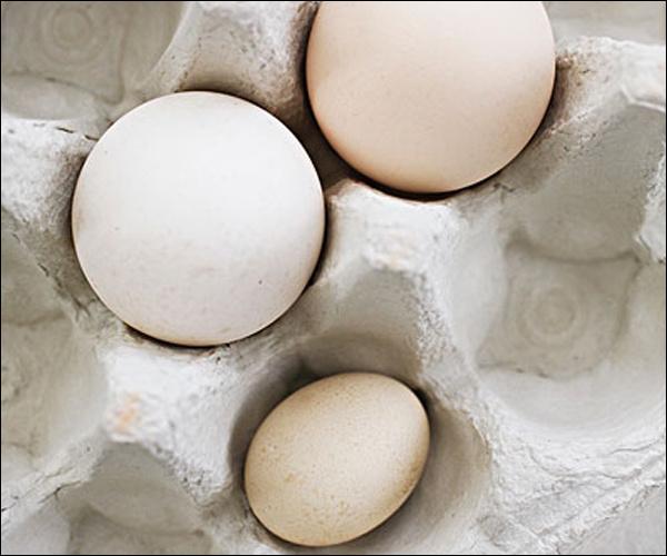 老公的蛋蛋是凉的(点击浏览下一张趣图)