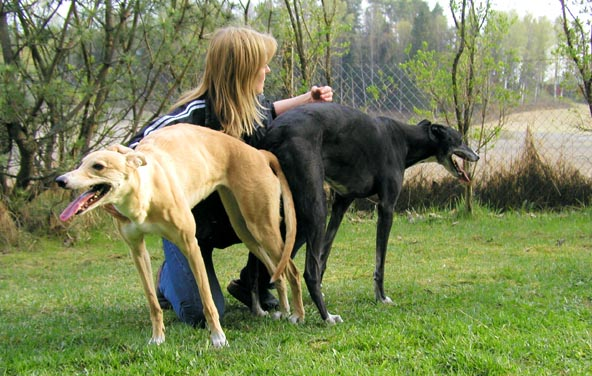 狗鞭入女人体:狗的东西有多大图(点击浏览下一张趣图)